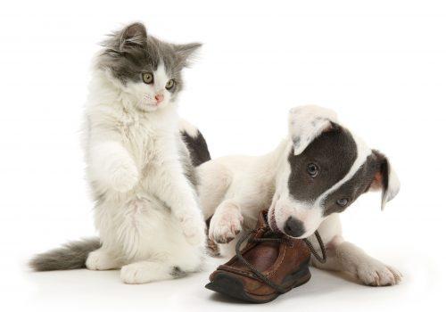dålig andedräkt på katt